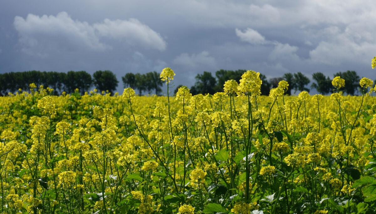 NMG verheugd met start proefproject natuurinclusieve landbouw Westeresch