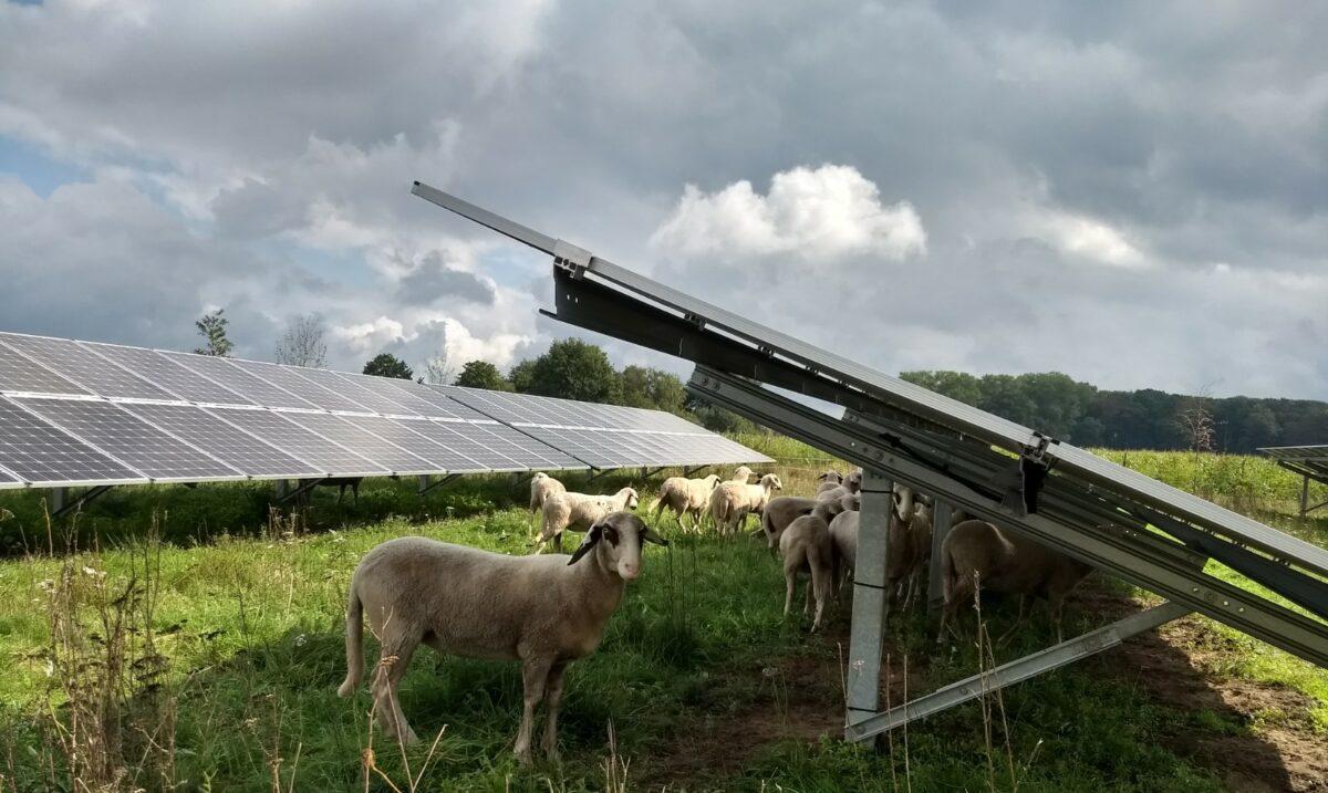 Checklist natuurwaarden bij grondgebonden zonne-energie