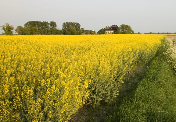 In Groningen is economie juist de aanjager van natuur