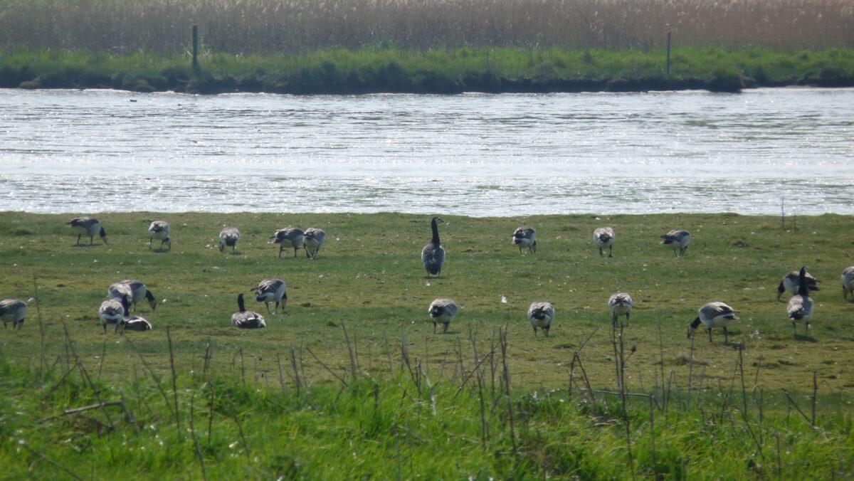 Natuurorganisaties en riviersectoren lanceren toekomstplan voor rivieren in Nederland