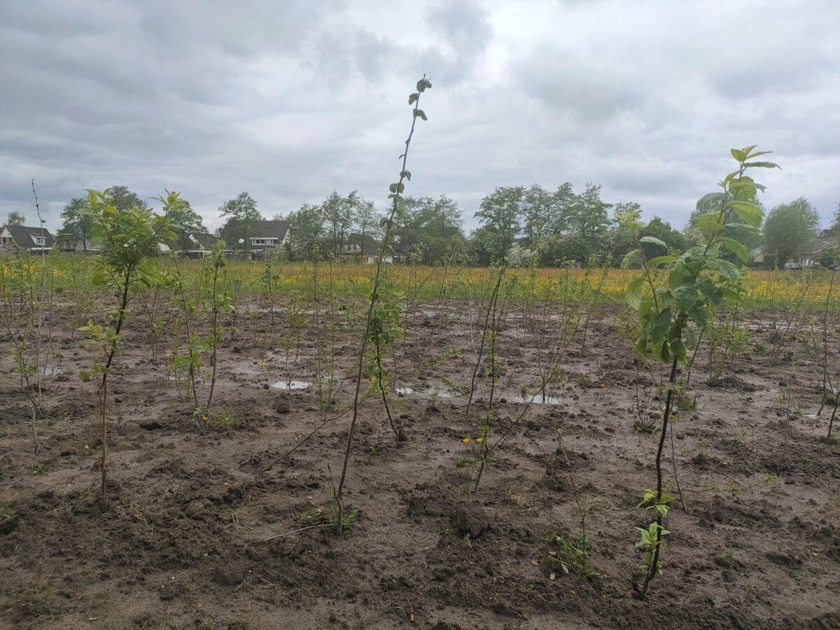 Groningse IT-bedrijven planten bos in Lutjegast om CO2-uitstoot te compenseren