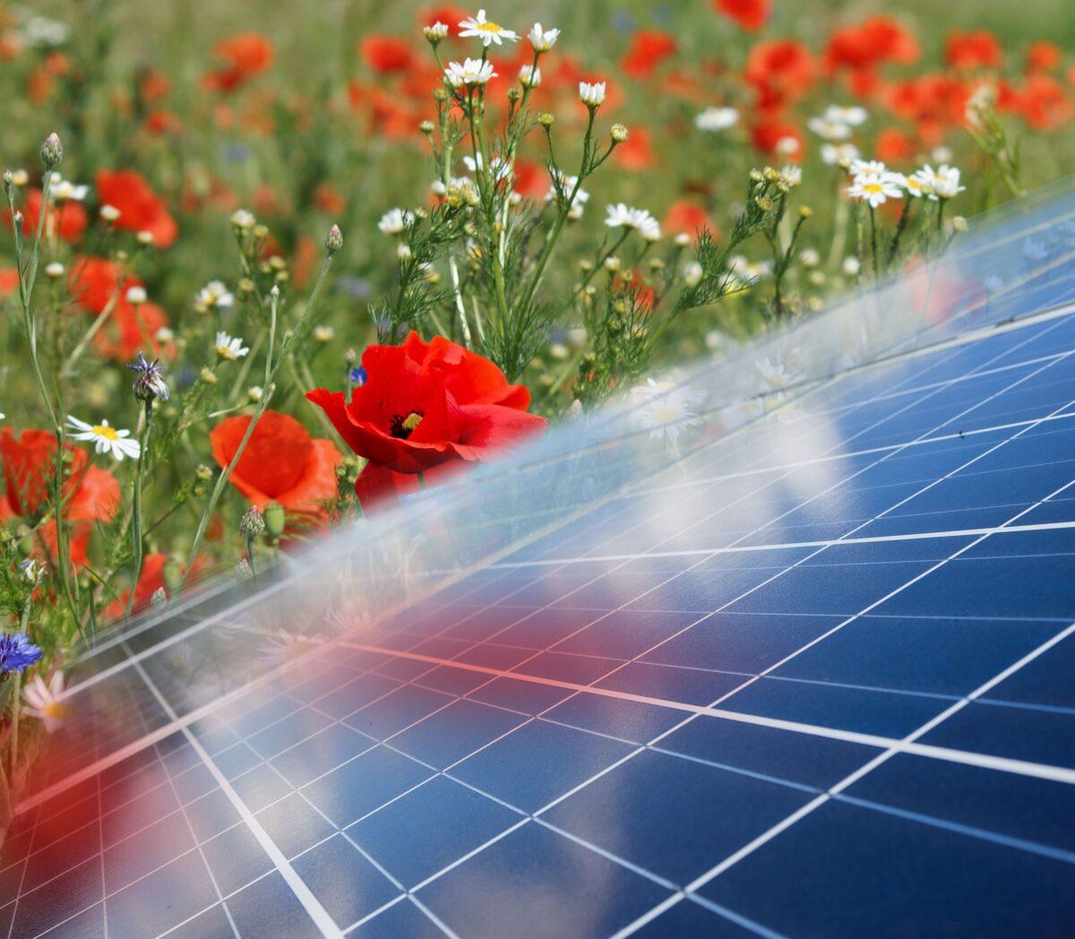 Handreiking | Natuur en landschap verdienen volwaardige plek in de regionale energiestrategieën