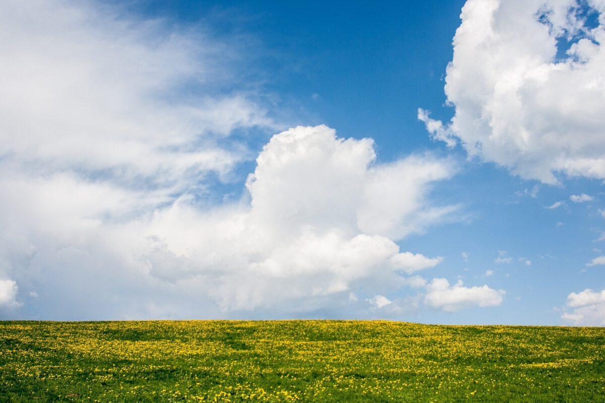Natuur en Milieufederaties ondersteunen petitie Longfonds: 'Stel een speciale gezant aan voor gezonde lucht'